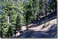 Mt Tom Trail 1